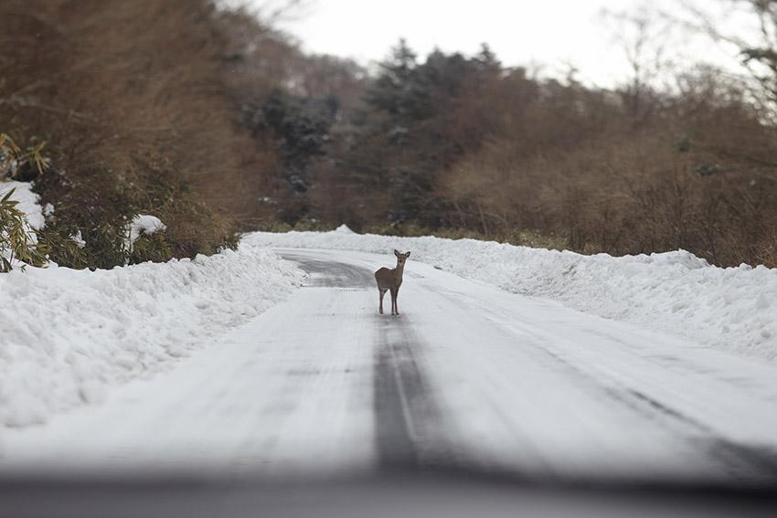 動物と接触事故